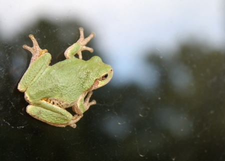 I haven't posted for a couple of days, and have quite a bit going on the next few days.  So, I thought I'd show you this little tree frog friend that was on our window yesterday.